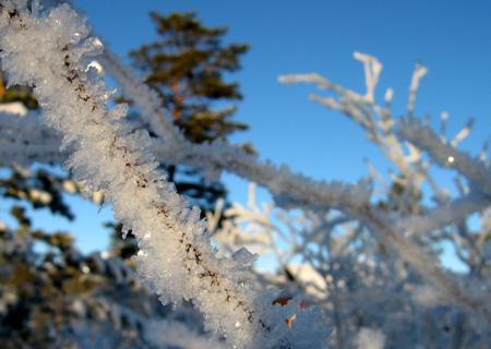 20071222rimfrost.jpg
